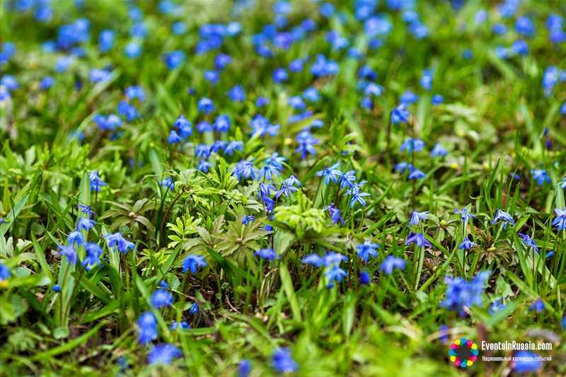 Музыкальные фестивали и праздник первоцветов: фестивальная весна на Тамбовщине