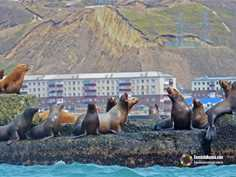 Sea Lion day