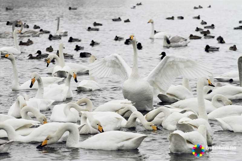 Какой будет «Алтайская зимовка» в этом году