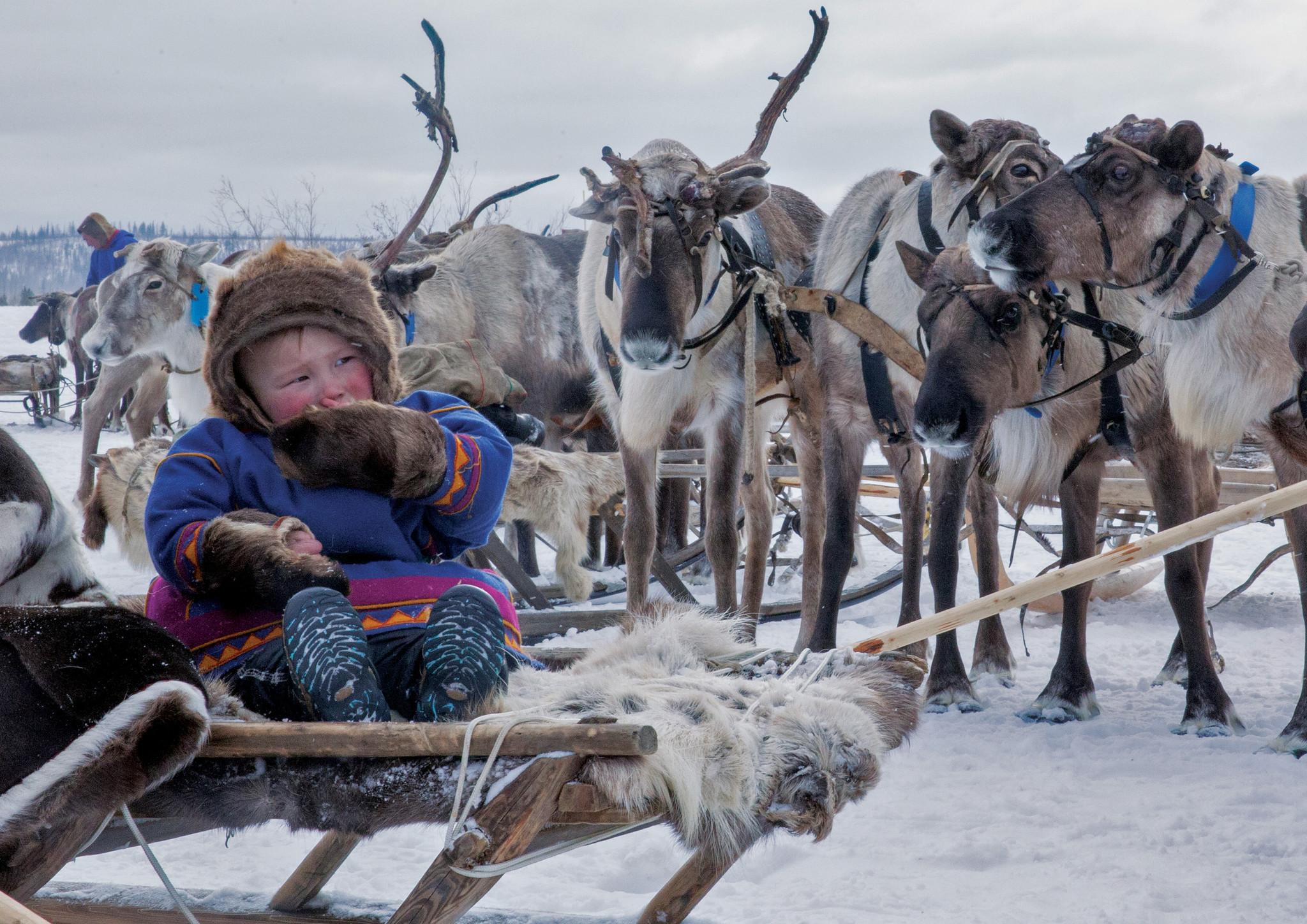 Праздник  оленевода на севере России